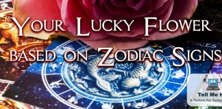 Lucky flower: Your Zodiac Sign