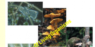 Study of living organism
